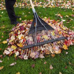 fall-lawns